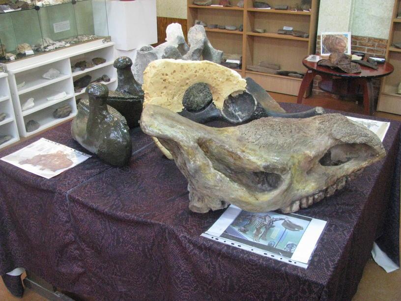 Краматорський музей – відділ палеонтології (2)