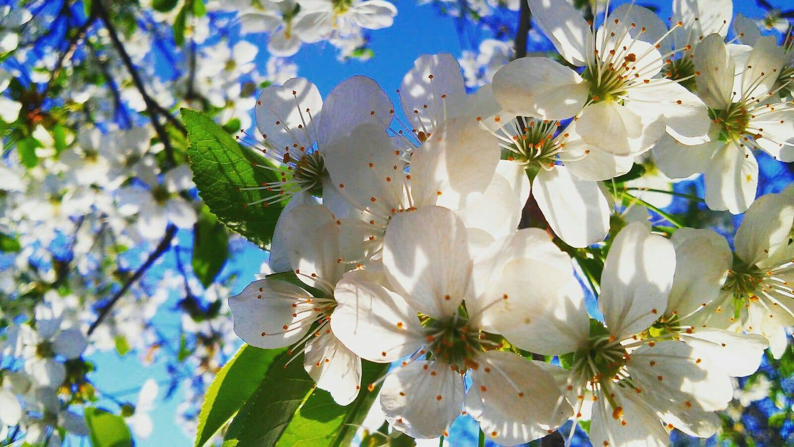 Весняне цвітіння Позажанрове фото Ботман Анастасія 17 р